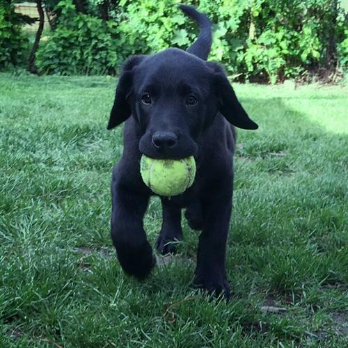 Cannon holding a ball