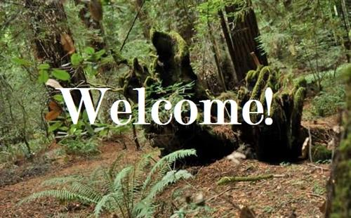 Image stating welcome with forest background